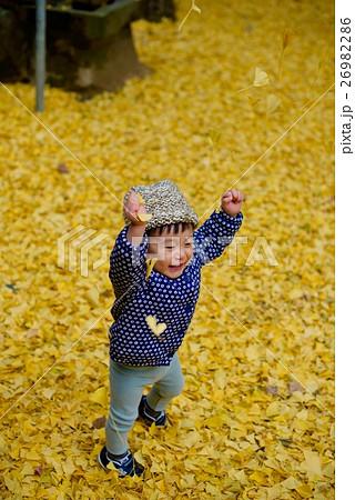 神戸の銀杏(いちょう)再度山は大龍寺、再度山公園、猩々池(しょうじょういけ) 26982286