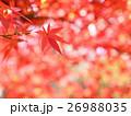 紅葉 モミジ 秋イメージ 26988035