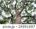 木 ツリー 樹の写真 26991687