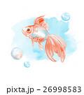 魚 描画 絵画のイラスト 26998583