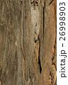 ユーカリノキ樹皮 26998903