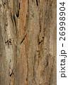 ユーカリノキ樹皮 26998904