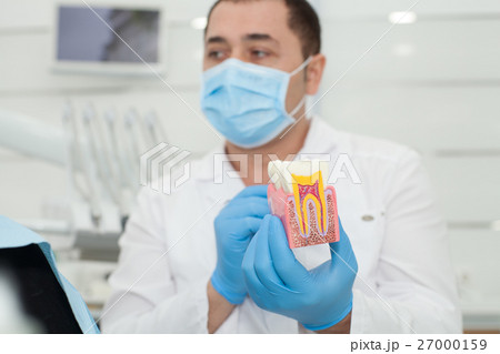 Male dentist holding model of teeth in his hands 27000159