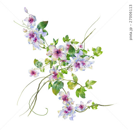 watercolor painting of leaves and flower, on whiteのイラスト素材 [27006113] - PIXTA