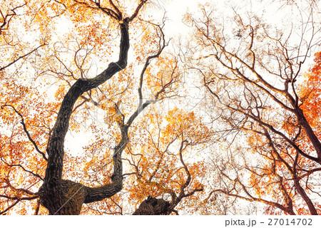 冬の木々 27014702