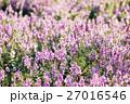 庭 庭園 ガーデンの写真 27016546