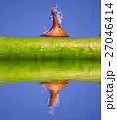 小枝 枝 トゲの写真 27046414