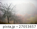 樹木 樹 ツリーの写真 27053657