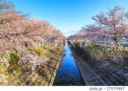 高田千本桜 27074987