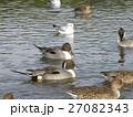 稲毛海浜公園に飛来したユリカモメとオナガガモ 27082343