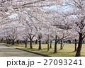 春・満開の桜並木 27093241