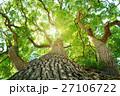 常緑樹、クスノキ、 エコロジーイメージ 27106722