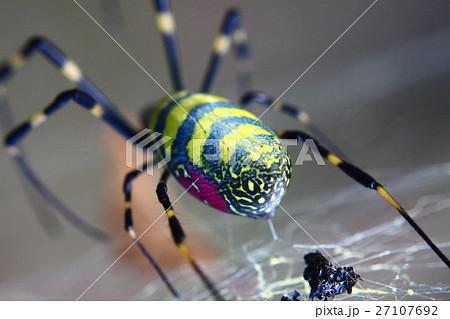 黄色と緑の模様の蜘蛛のアップ 27107692