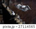 ユリカモメ 鴎 海鳥の写真 27114565