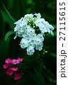 植物 花 フロックスの写真 27115615