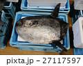 マンボウ 魚 漁港 市場 鮮魚 海産物 食材 漁獲 漁業 富山 高岡 北陸 27117597