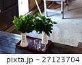 神棚用のサカキ・榊 27123704