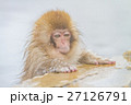 長野_温泉に入る子供猿 27126791