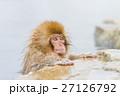 長野_温泉に入る子供猿 27126792