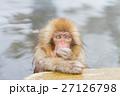 長野_温泉に入る子供猿 27126798