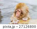 長野_温泉に入る子供猿 27126800