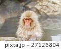 長野_温泉に入るニホンザル 27126804