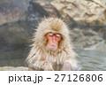 長野_温泉に入るニホンザル 27126806