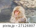 長野_温泉に入るニホンザル 27126807