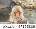 長野_温泉に入るニホンザル 27126889
