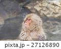 長野_温泉に入るニホンザル 27126890
