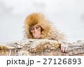 長野_温泉に入る子供猿 27126893