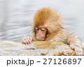 長野_温泉に入る子供猿 27126897