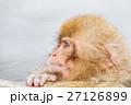 長野_温泉に入る子供猿 27126899