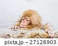 長野_温泉に入る子供猿 27126903
