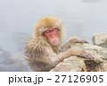 長野_温泉に入るニホンザル 27126905