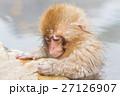 長野_温泉に入る子供猿 27126907
