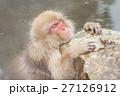長野_温泉に入るニホンザル 27126912