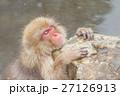 長野_温泉に入るニホンザル 27126913