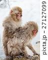 長野_温泉に入る子供猿 27127099