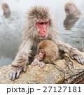 サル ニホンザル 温泉の写真 27127181