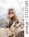 サル ニホンザル 温泉の写真 27127183
