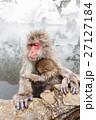 サル ニホンザル 温泉の写真 27127184