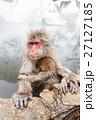 サル ニホンザル 温泉の写真 27127185