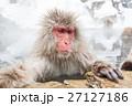 長野_温泉に入るニホンザル 27127186