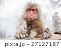 サル ニホンザル 温泉の写真 27127187