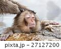 長野_温泉に入る子供猿 27127200