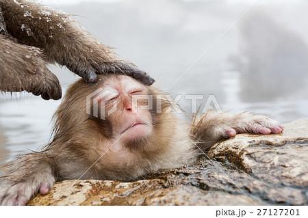 長野_温泉に入る子供猿 27127201
