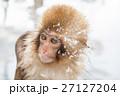 長野_温泉に入る子供猿 27127204