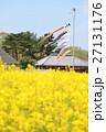 国営ひたち海浜公園の菜の花と鯉のぼり 27131176