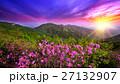 咲く 花 開花の写真 27132907